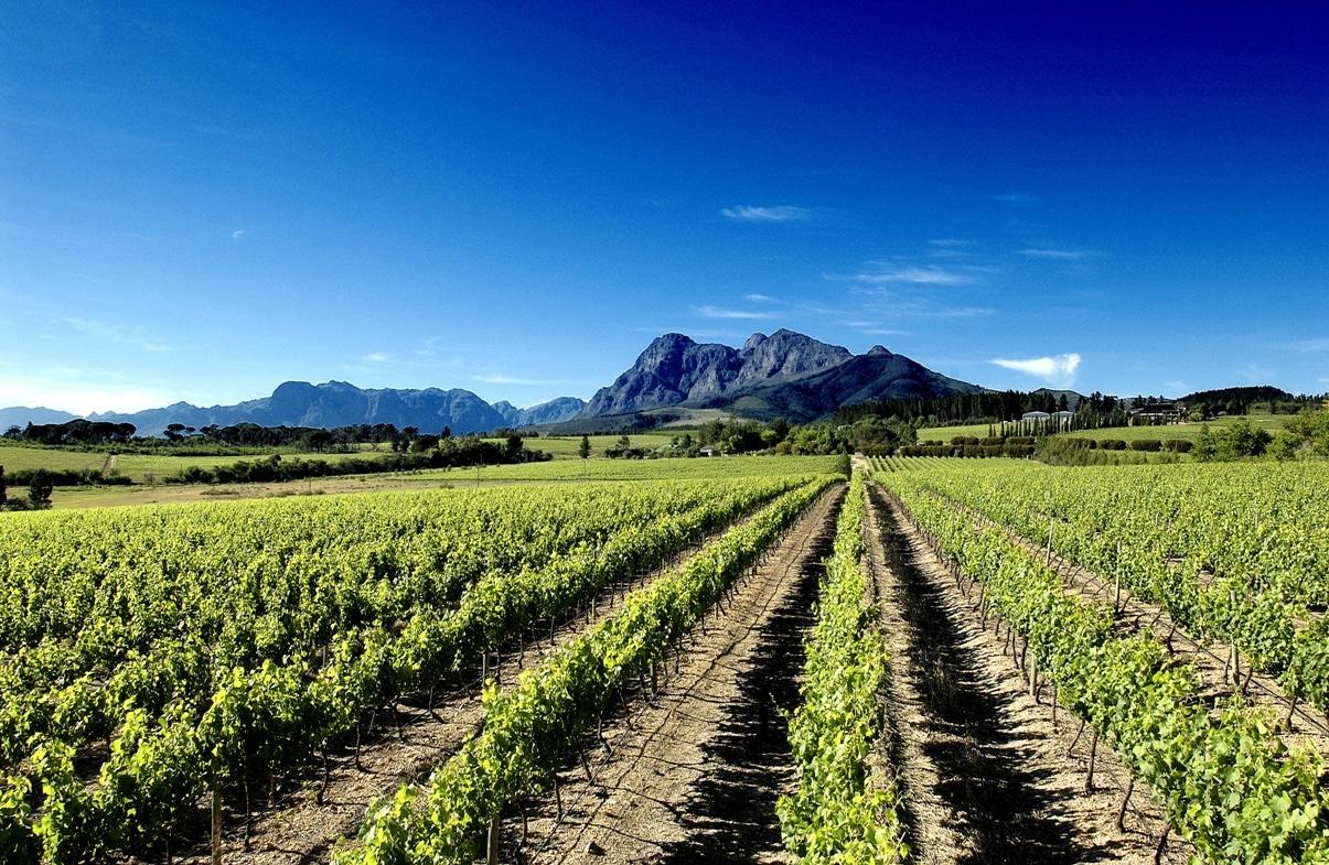cape town wine tasting tours & safaris