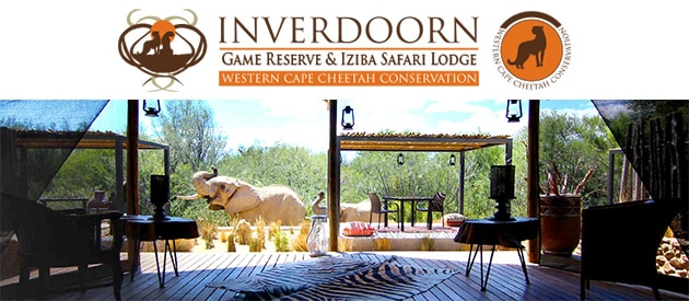 big 5 safaris cape town