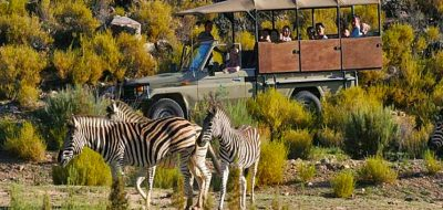cape town to aquila day safari options