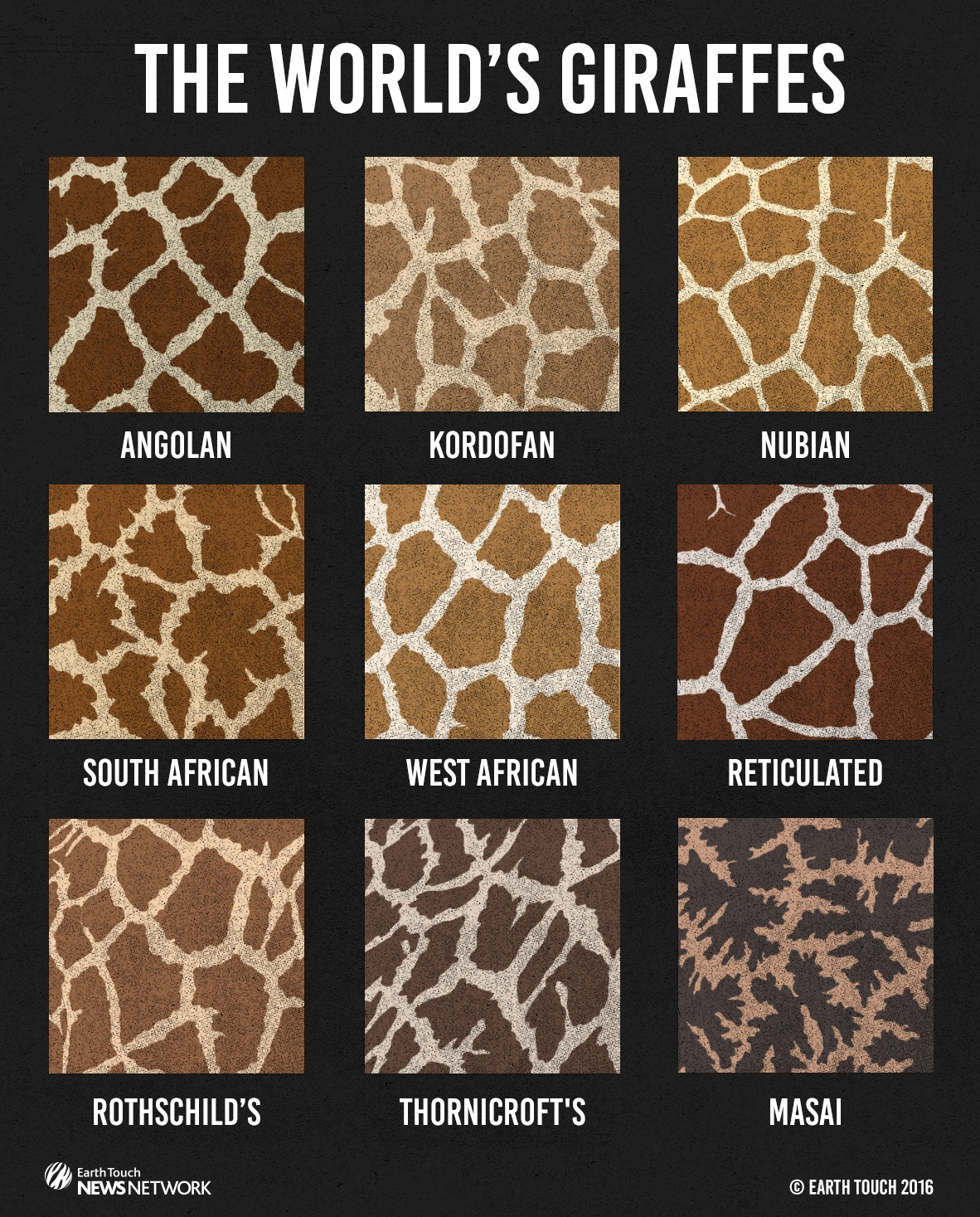 skin patterns of the worlds giraffes