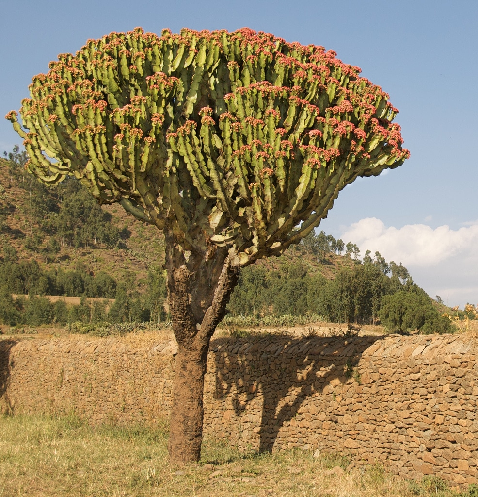 hluhluwe tree species
