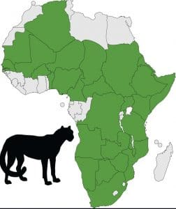 cheetah's distribution throughout africa map