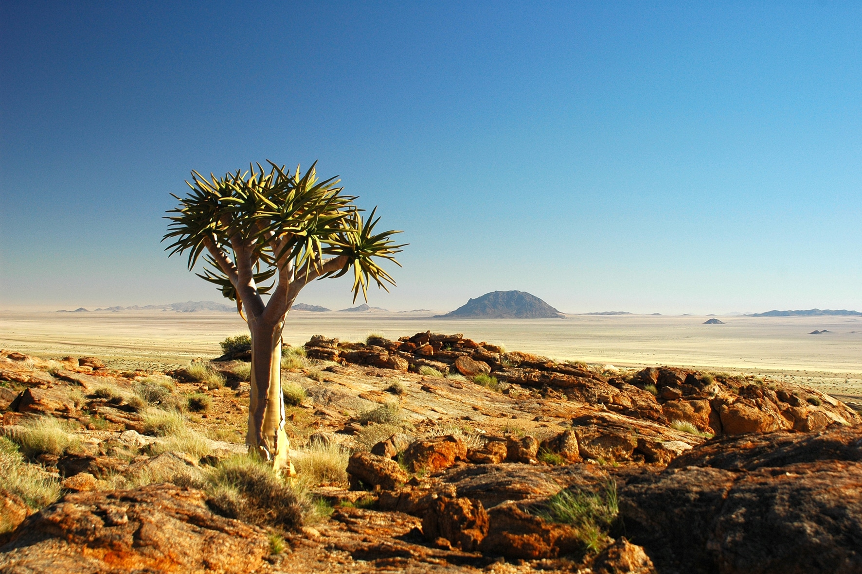 nama karoo biome south africa