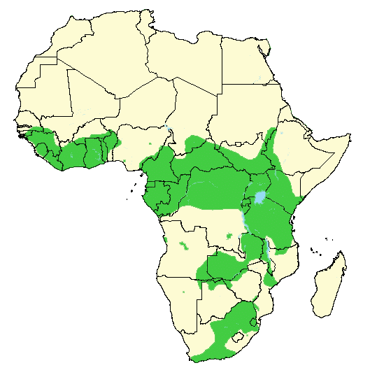 map distribution of buffalo throughout Africa