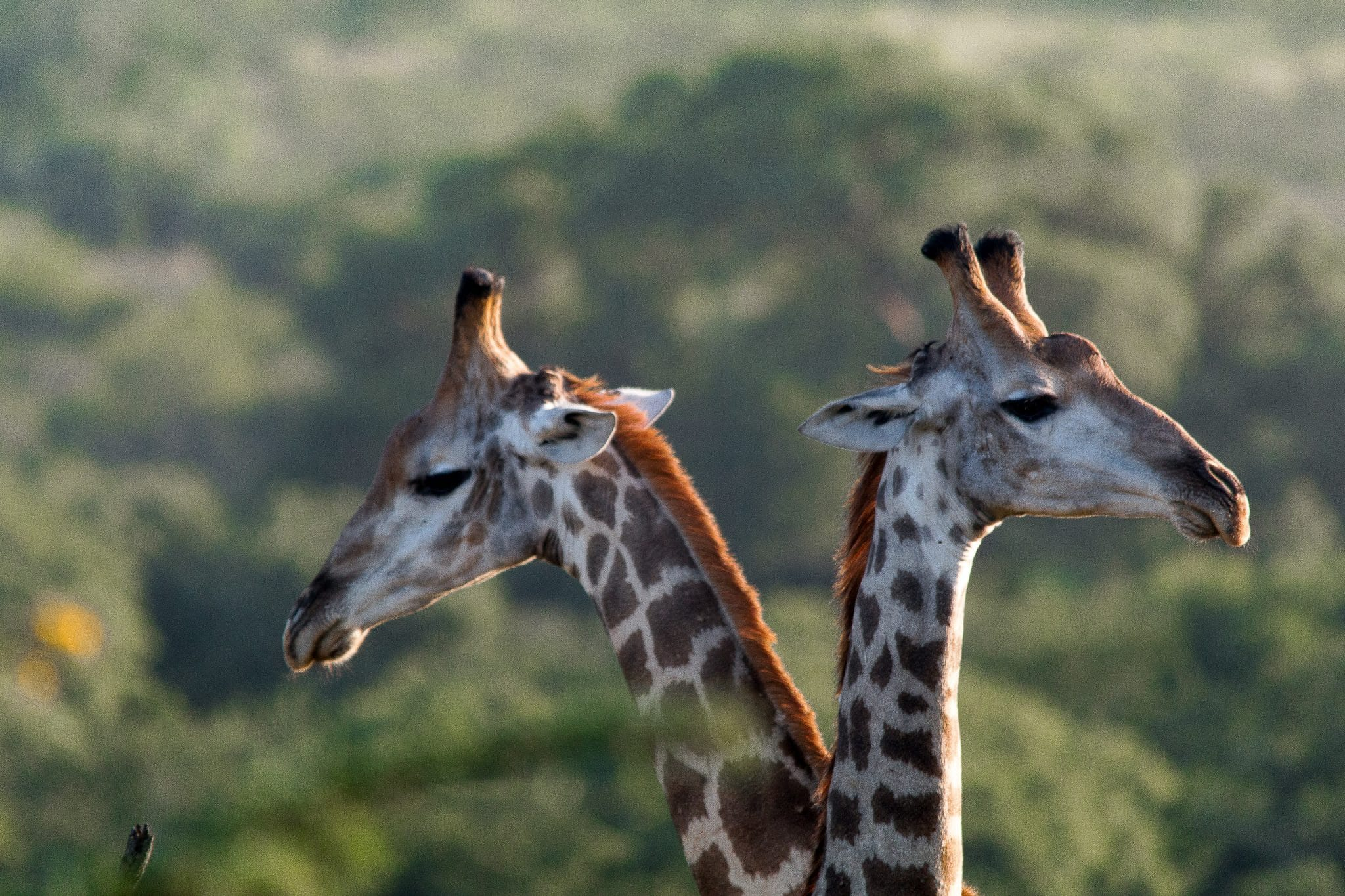 wildlife sightings on a south african safari package