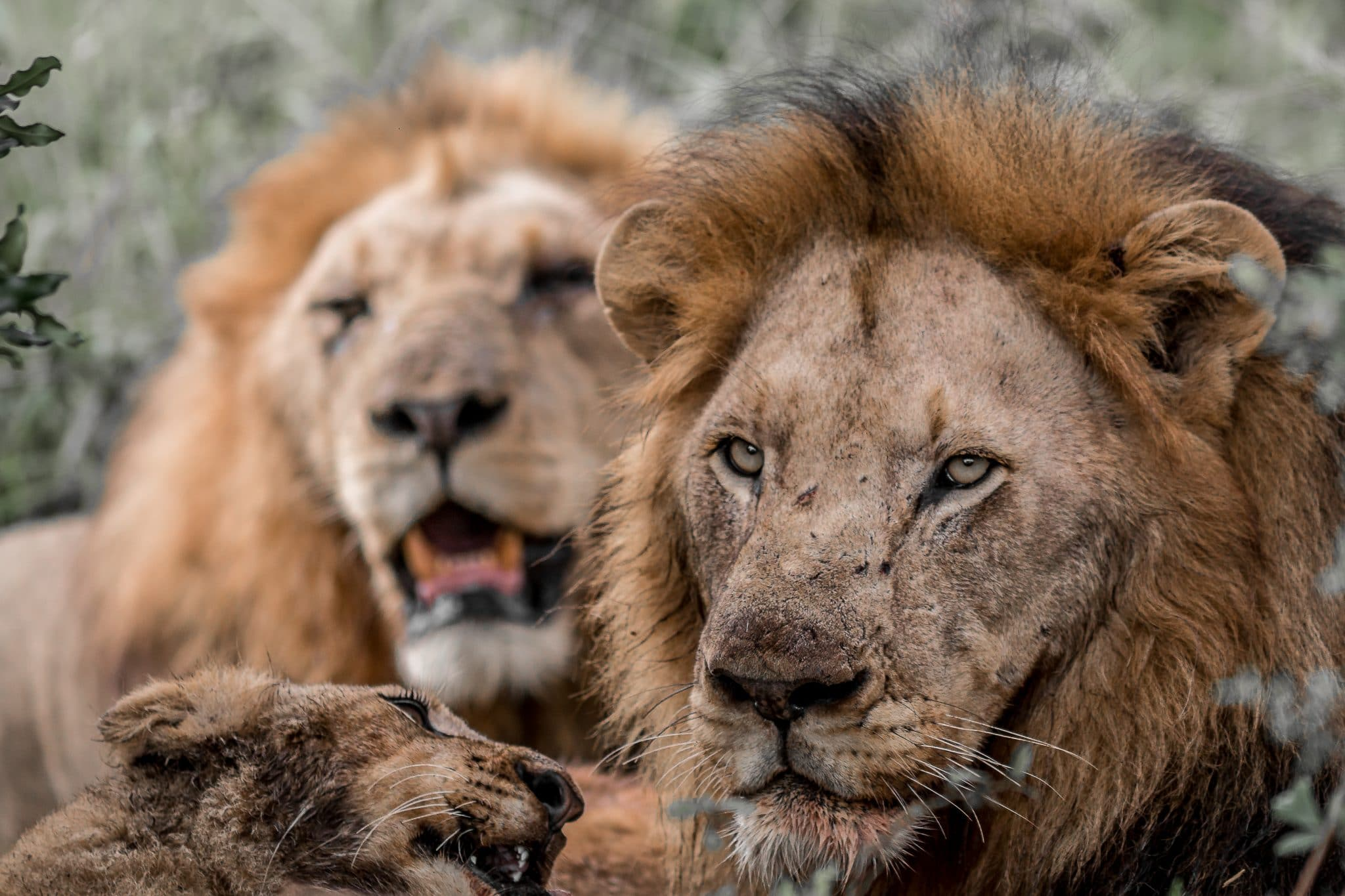 South Africa Safari Package Tours from Durban
