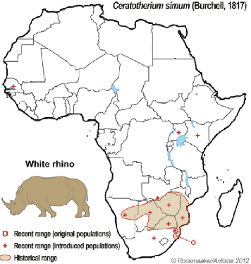 map indicating the white rhino distribution in africa