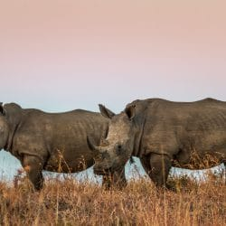 day safari options to hluhluwe-imfolozi park
