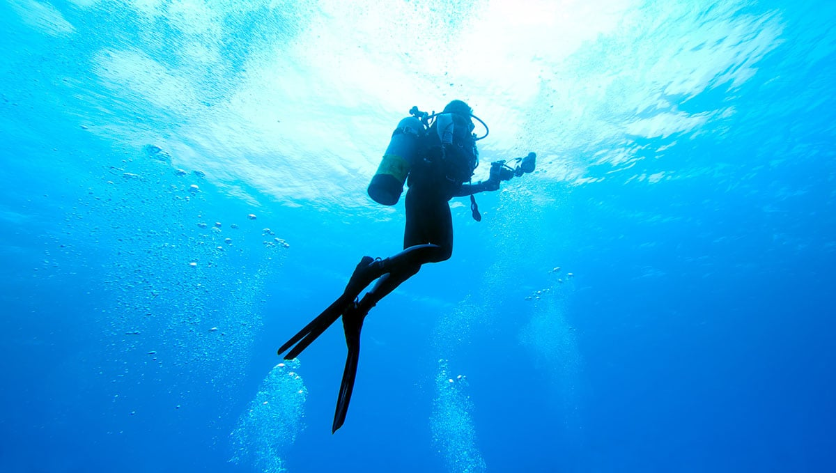 Safari and Scuba Holiday Packages Durban
