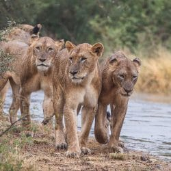 full day big 5 safari hluhluwe-imfolozi park