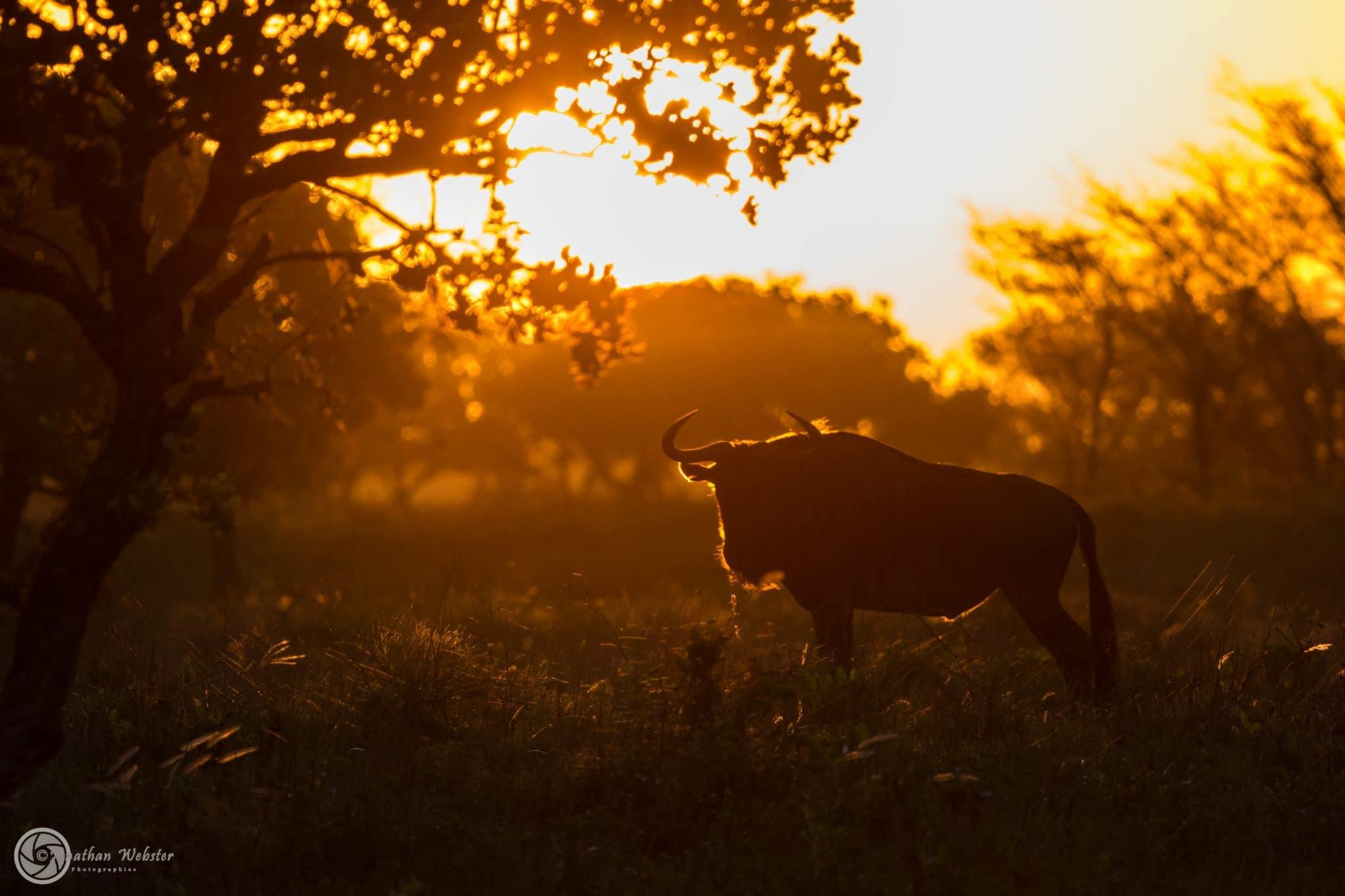 kwazulu natal south africa