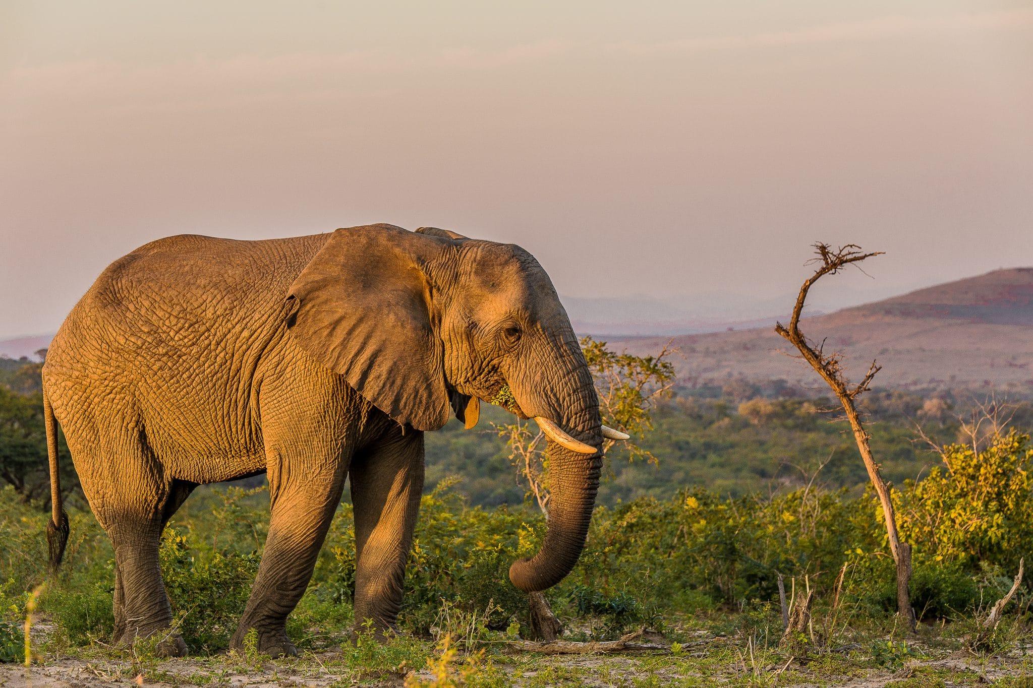 14 Day Cape Town & KwaZulu Natal Safari Tour Package