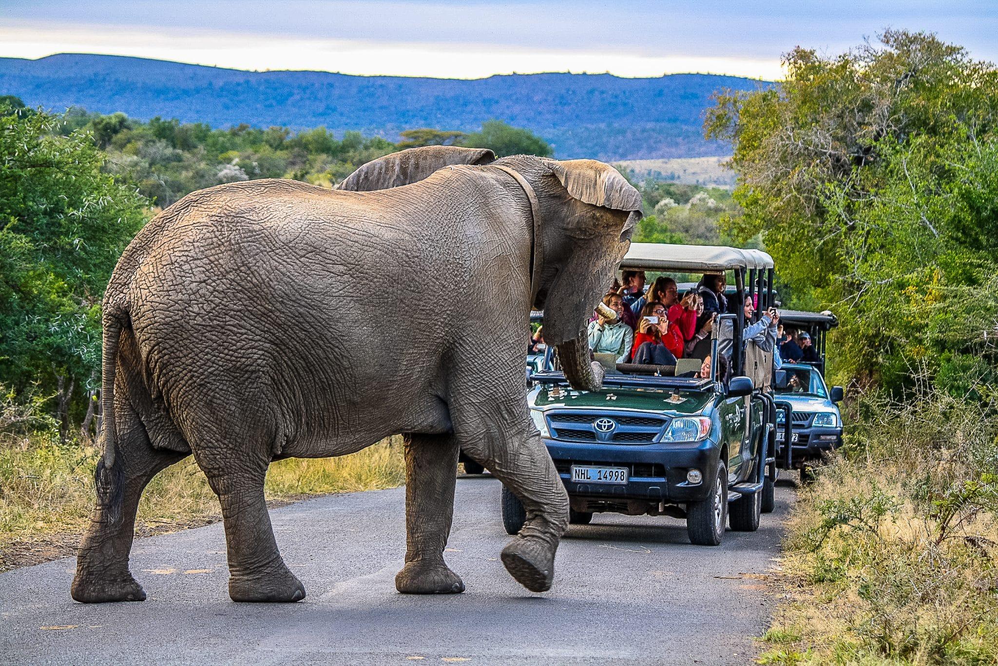 african big 5 elephant