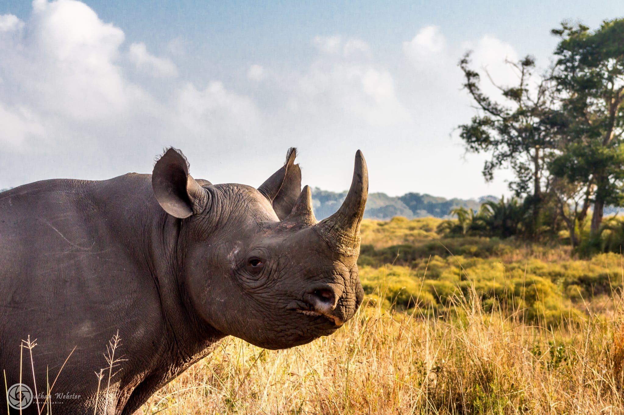 Big 5 | Madikwe Game Reserve