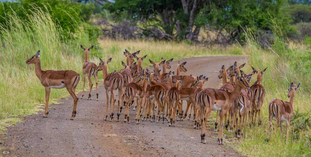 animal evolution and natural selection