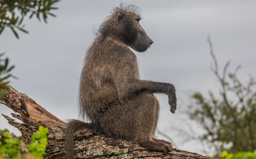 animal evolution & interbreeding