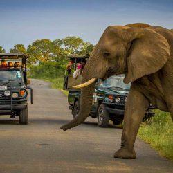 2 night hluhluwe safari package