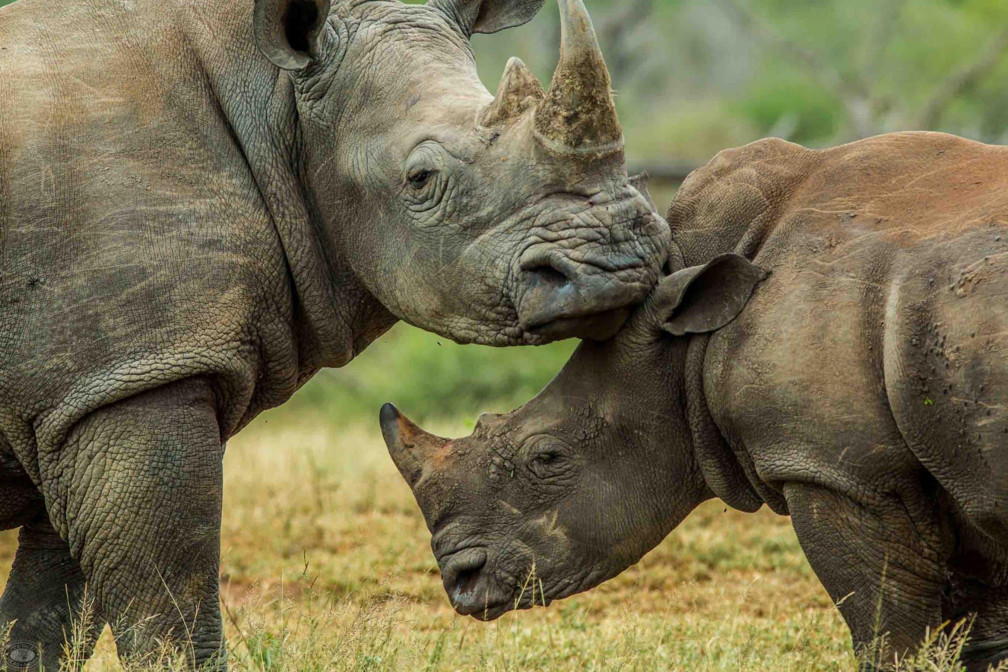 safari options both day and overnight hluhluwe-imfolozi park