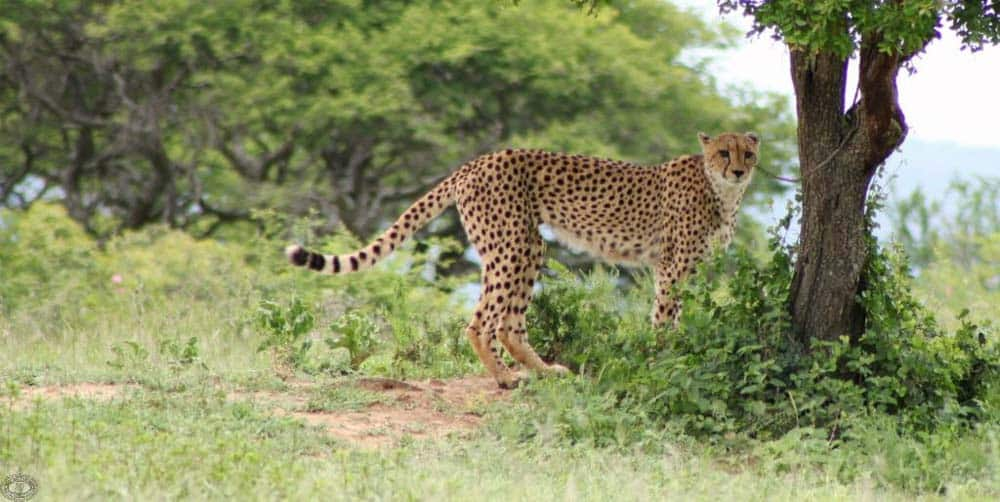 day safari options hluhluwe-imfolozi park
