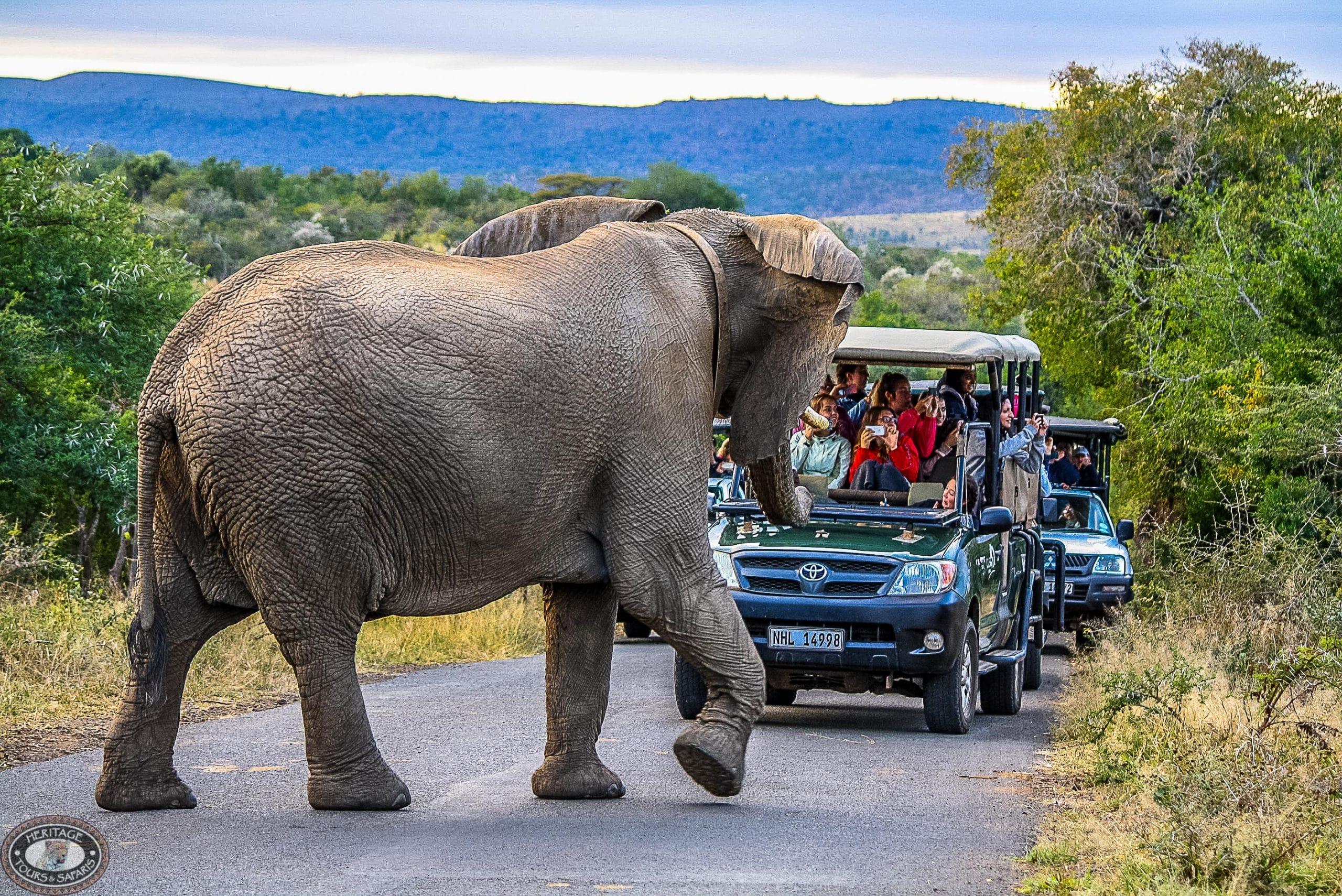 full day safari hluhluwe-imfolozi park safari