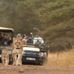 manyoni big 5 safari