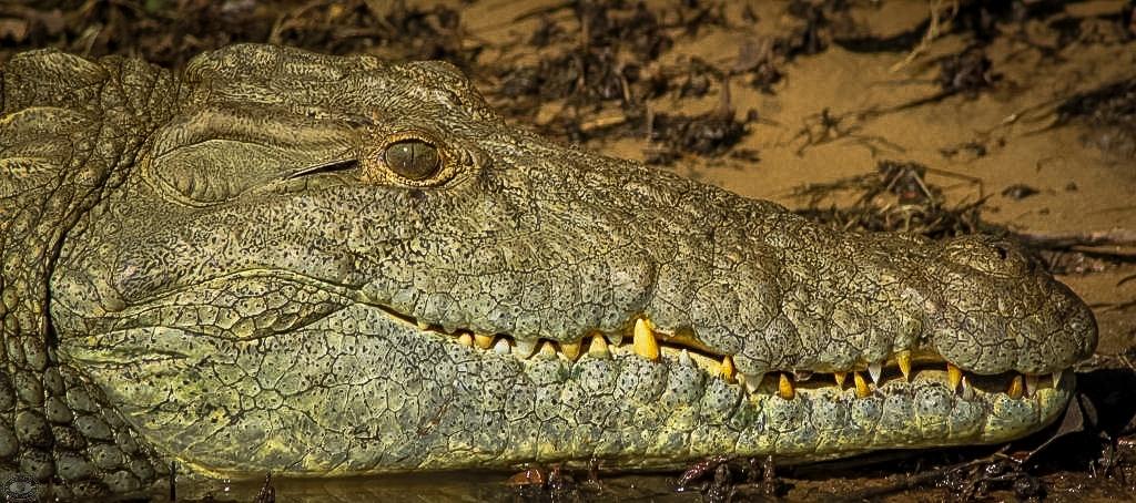 zulu croc reptile park hluhluwe