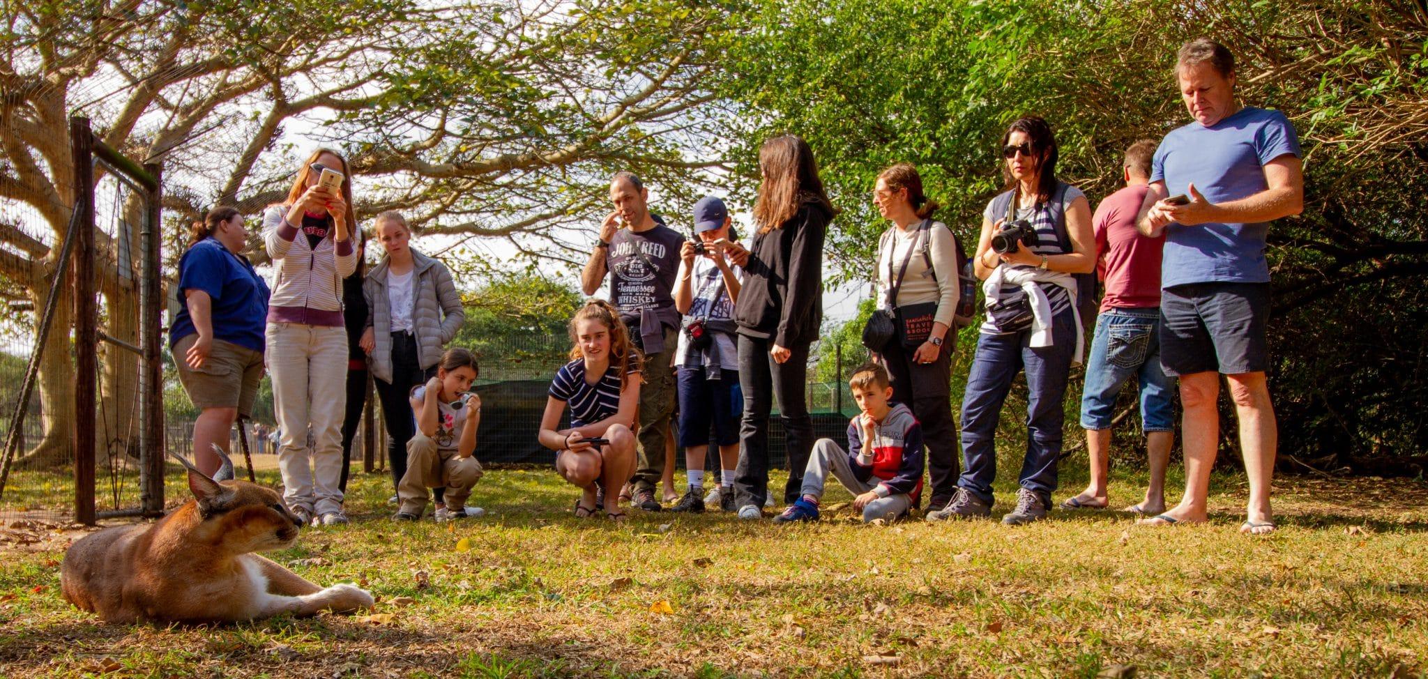 hluhluwe cheetah centre tour