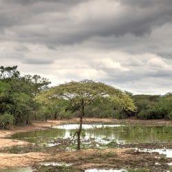Mkhuze Game Reserve watering hole