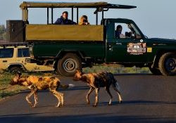 safari game drive truck