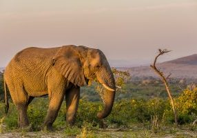 14 Day Cape Town & KwaZulu Natal Safari Tour Package
