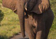 half day hluhluwe imfolozi big 5 safari less 15%